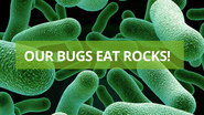 Canadian Crowdfunding Campaigns | Our Bugs Eat Rocks