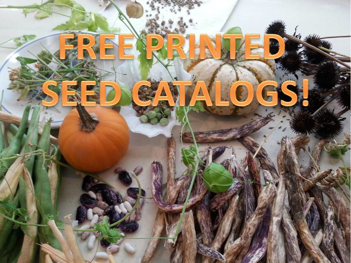 List of FREE Printed Seed Catalogs: Looking for hope and joy in winter.