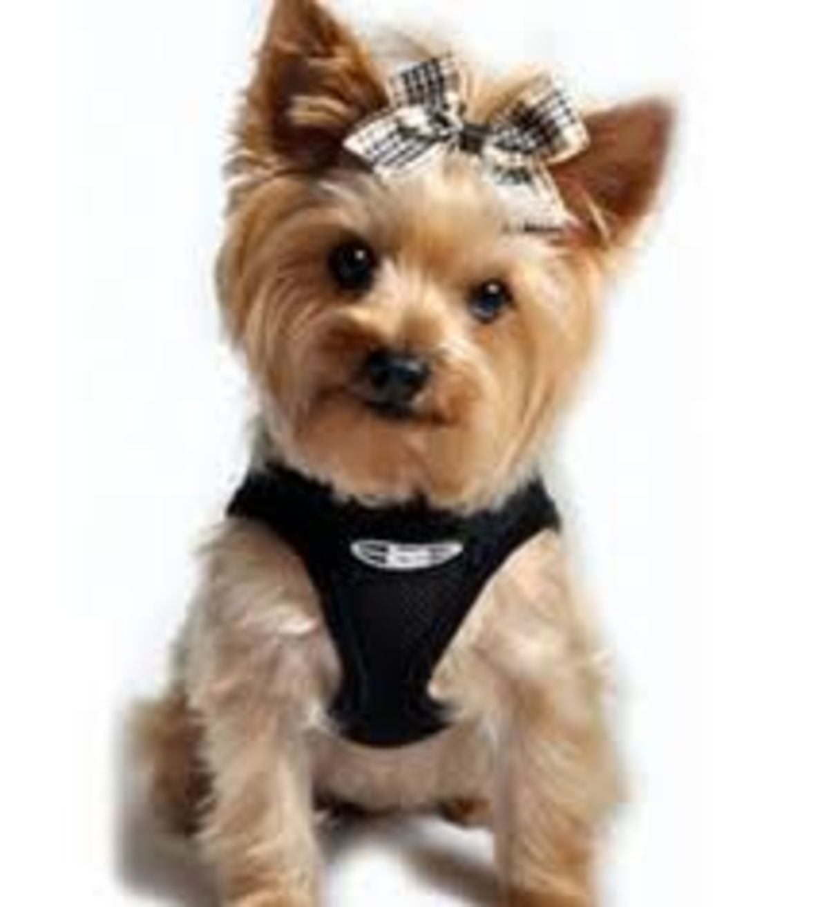 Dog Bike Trailers - Small Dogs