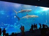 Everything you'll miss about Okinawa once you leave | Okinawa Churaumi Aquarium