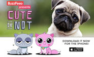 Podsumowanie Tygodnia 14.02 - 2.03.2015 | If You Think Tinder Needs More Cute Pets, BuzzFeed Has The App For You