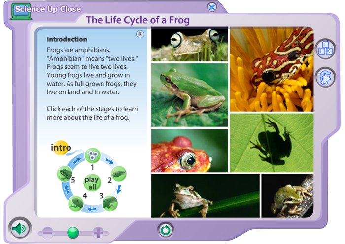 the life cycle of a frog essay Skills practiced: reading, writing, frog life cycle for a pdf version of the entire book, click here (site members only)  if your margins are too large on top, try this version: pdf version of the entire book, click here (site members only).