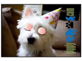 Funny Birthday Videos | Funny Dog Video Clip Birthday Greetings West Highland Terrier Loves Cake!