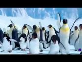Funny Birthday Videos | The Penguin Song Happy Birthday