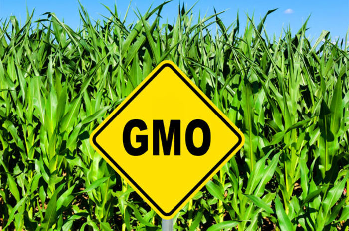 a discussion on gmo