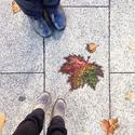 4-colour leaf on North Terrace #winter #adelaide