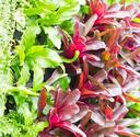 Growing up: Make Your Own Vertical Garden