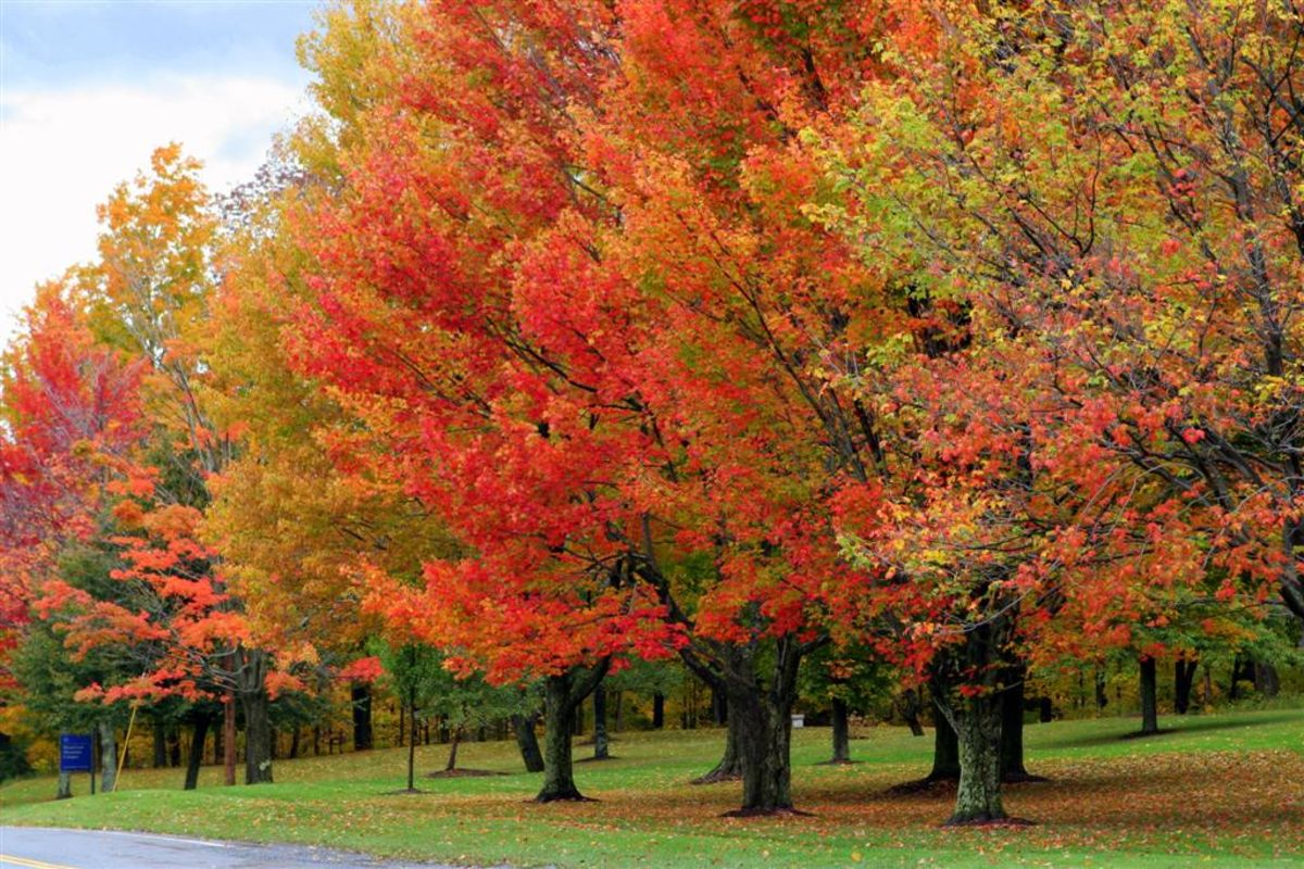 Top 10 fall color destinations in usa a listly list for Best fall destinations in the us