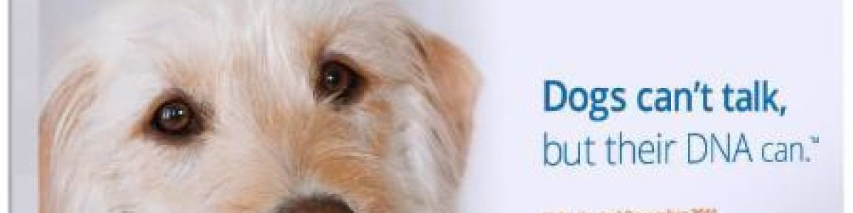 Headline for Best Dog DNA Testing Kits Reviews