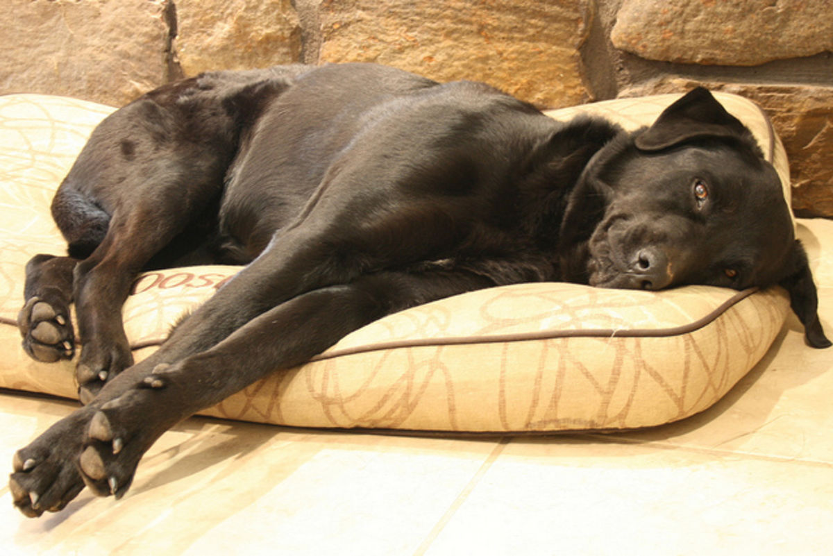 Cheap waterproof dog beds for large dogs a listly list for Cheap dog beds for large dogs