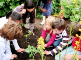 Your Ideas for Ag Education | Support school gardens