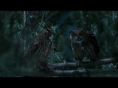 GEICO Owl Commercial - Did You Know Some Owls Aren't That Wise?