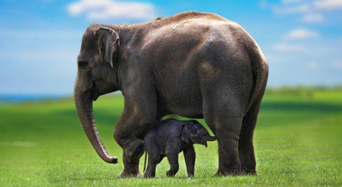 Elephantslist