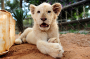 The Lion Park in South Africa | Home