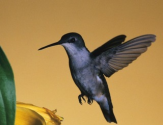 Top 5 Post on Google Hummingbird | Hummingbird Is Google's Biggest Algorithm Change In 12 Years