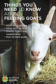 Goats eat a lot, but there are things they shouldn't. Here's a handy guide on what to feed and what not to feed your ...