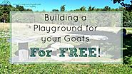Everything You Should Know About Raising Goats | Building a playground for your Goats for FREE!