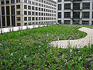 Green Roofing | Green Roofs