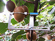 Improving the production of kiwifruit with smart irrigation
