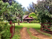 "Historic Hanalei Beach Houses | Mahamoku - ""Island of Peace"""