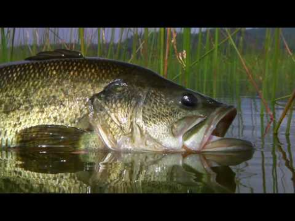 Best flies for bass fishing a listly list for How to fly fish for bass