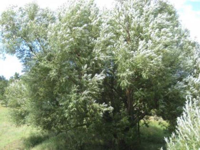 top 10 native colorado plants