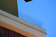 Types of Bird Spikes | Stainless Steel Bird Spikes
