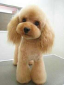 Best Clippers For Poodles | best clippers for poodles via @Flashissue