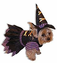 Witch Dog Halloween Costume