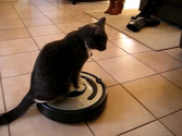 Self Cleaning Vacuum Robots | Dexter the cat rides the Roomba