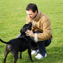 Online Dog Training Schools | Online Course: Dog Training 101 - CEU Certificate