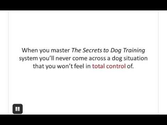 Online Dog Training Schools | Dog Training Guide - Best Online Dog Training Available