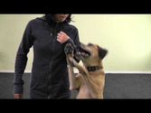 Online Dog Training Schools | What is Treatpouch.com? Online Dog Training School