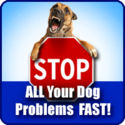 Online Dog Training Schools | Best Online Dog Training Schools