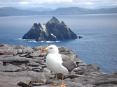 Best Places to Visit in Ireland | The Skellig Islands
