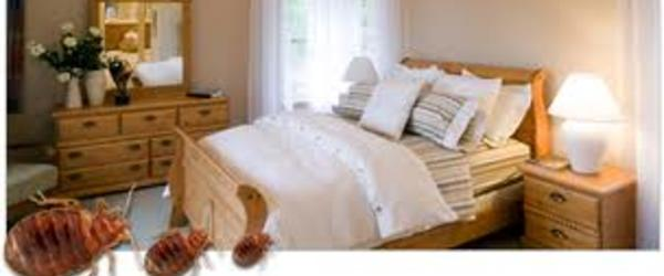 Get Rid Bed Bugs Permanently