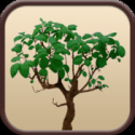 Surprisingly Educational Apps | Family Trees