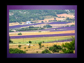 Lavender Distillation in France