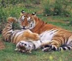 Best Parks in India for Tiger sighting