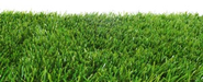 Zoysia Grass Reviews