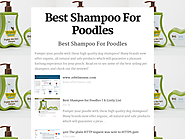 Best Rated Shampoos For Poodles Reviews | Best Shampoo For Poodles