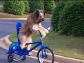 best Covered dog bike trailer Reviews 2014 | Best Covered Dog Bike Trailers Reviews 2014