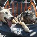 best Covered dog bike trailer Reviews 2014 | Covered Bike Trailers for Dogs
