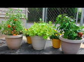 Small Garden Hand Tools | Learn How to Garden for Beginners - Container Gardening - Urban Rooftop Porch Patio Balcony