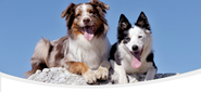 Puppy & Dog Training Videos | Dog Training Online