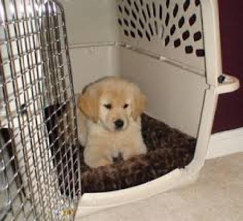 How Big Dog Crate