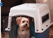 Best Dog Crates & Kennels 2014 Reviews | The Best Way to Kennel Your Dog: Plastic Crate or Wire Cage?