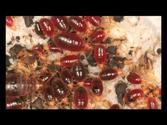Bedroom Guardian Stop Bed Bugs - A MUST SEE Video