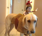 Weird Niches | Halloween Costumes for Dogs