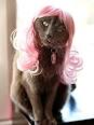 Wigs for Dogs and Cats